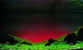 水草造景作品:水草造景(120cm)-98