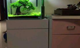 各位大神水草缸求一篇莫斯树的文章鱼缸水族箱在龙颠水草首页出现
