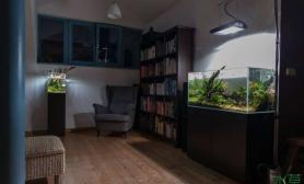 书房里的水草缸