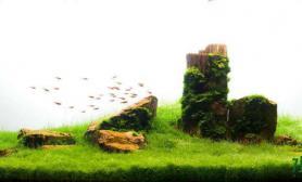 天空之下水草缸绿地之上