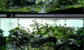 一组高大上的草缸水族造景欣赏