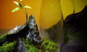 奇妙微景观水草缸挑战你视觉的美鱼缸水族箱
