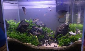庆祝app上线水草缸发个30的小缸鱼缸水族箱哈哈