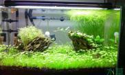 热带鱼水草缸