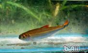不同水质对观赏鱼的生长影响