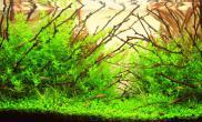 沉木树枝枝条水草缸造景风格欣赏