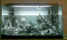 新学的用石头布景也挺漂亮鱼缸水族箱