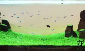 高清美图分享水草缸你最喜欢哪个?