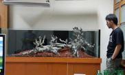 水草造景作品:水草造景(150cm)-6