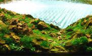 水草缸造景沉木《印象·崂山》120CM尺寸付岩松设计