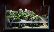 水草造景1米x1米x0图片5米水陆缸