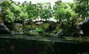 像微缩小树一样的水草有哪些?叫什么名字?是阴性草还是阳性草