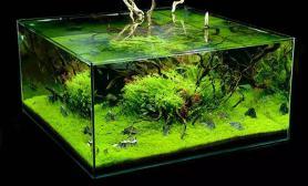 造景关于水族箱油膜形成与处理方法的问题