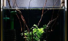 这是一个独特的具有插花艺术的水草缸水族箱图片