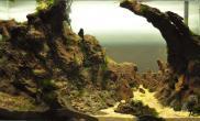 屌爆的石景缸鱼缸水族箱