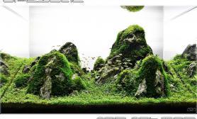 沉木青龙石水草造景60CM尺寸设计28