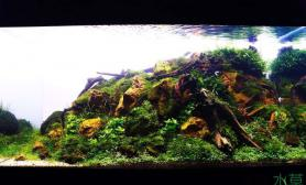 水族箱造景2012 ADA《绿野青丘》