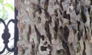 这是松皮石吗?