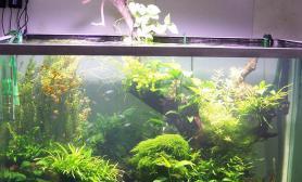 南京水族店里拍到的造景