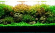 珍珠水草日本水草趴地矮珍珠