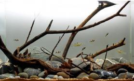 造景之路水草缸造景原生态鱼缸12