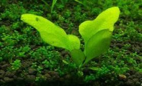这是什么草水草缸请大神解答沉木杜鹃根青龙石水草泥