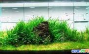 金鱼缸里应该种什么水草(图)