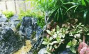 水草造景90水陆缸