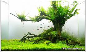 各种水草MOSS树青龙石打底趴地