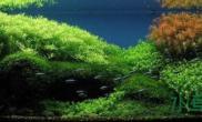 【转载】像草原