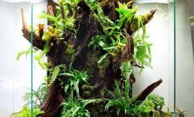 雨林生态缸多面缸