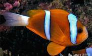 观赏鱼饲养中五种常见水