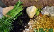 水陆两用草缸造景过程
