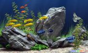 鱼缸风水篇办公室里怎样养鱼才合适(图)