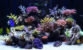jojoforce400升RT岩礁海水缸造景欣赏