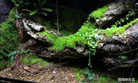 森林底表搅拌ZOOMED椰土雨林枯叶碎片