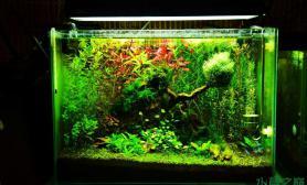 鱼缸造景一张流水草缸《玲珑》修建前-50超白最后的留念