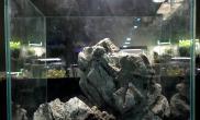 20方青龙石骨架分享