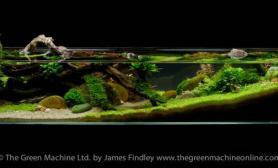 沉木青龙石水草造景150CM及以上尺寸设计22