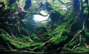 杜鹃根造景水草缸做出意境的作品难得的佳作