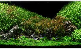 Aquascape of the Month July: