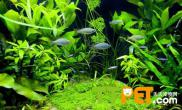 鱼缸如何水草造景