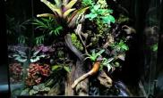 梧州侯成铭雨林生态缸案例】雨林生态缸(45CM