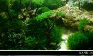 泰国沉木树林造景欣赏草缸