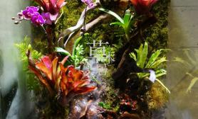 水草造景新开的雨林缸