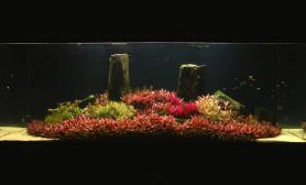 超清草缸开缸过程水草缸容量:1600 Litre