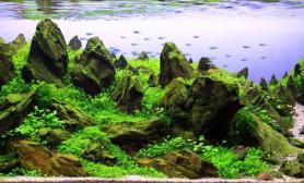 水草缸陈汉轩造景沉木水草青龙石90CM尺寸作品设计