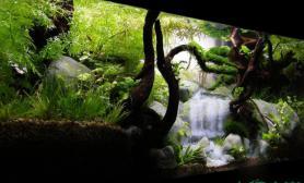 水族箱造景草缸中的瀑布