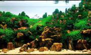 超白鱼缸造景之中国式水草造景