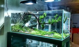 沉木青龙石水草造景方缸、双面隔断缸尺寸设计04